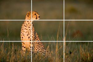 Exemplo guepardo Regra dos terços.